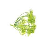 la cupa prodotti agricoli tipici salentini caroselle pianta